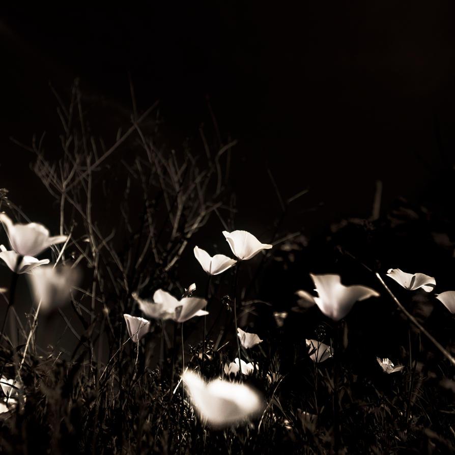 Bloom of the Nocturn by Eldereyes