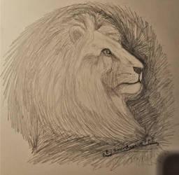 Lion Study.