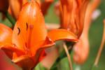 Flower 1