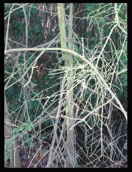 Branchy.