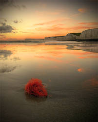 Neon TumbleWeed by wreck-photography
