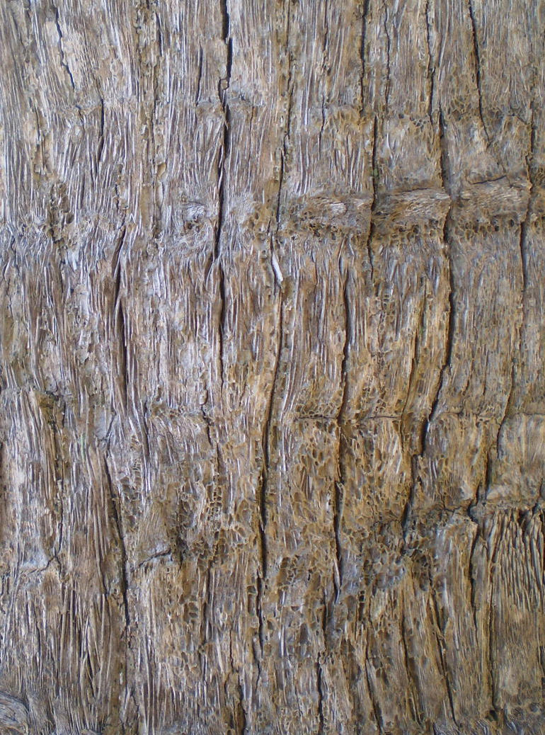 Tree Bark Texture Png Tree Bark Texture by
