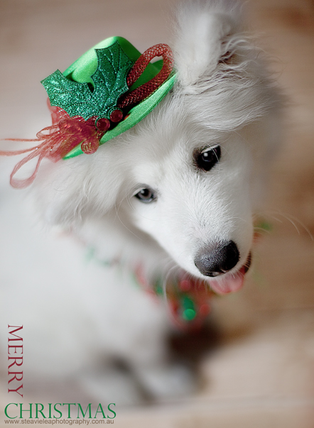 Christmas Mr by SteavieLea
