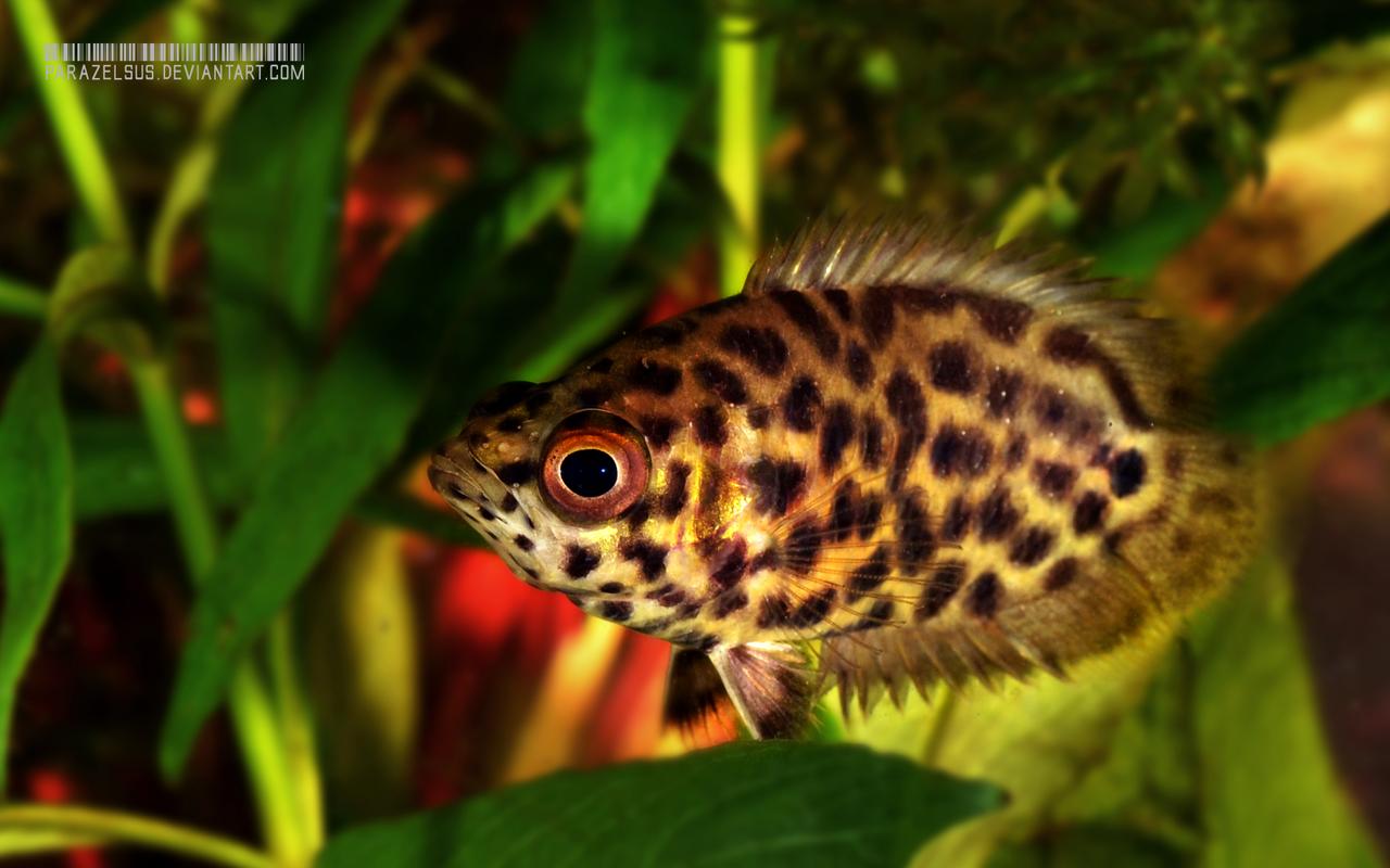 Id es de poissons m chants pour aquarium de 500 litres for Bac a poisson 1000l