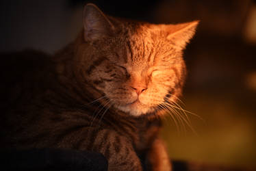 the light and dark side of a cat by Parazelsus