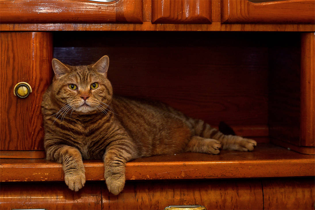 Cat in the buffet by Parazelsus