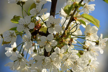 An image of spring by Parazelsus