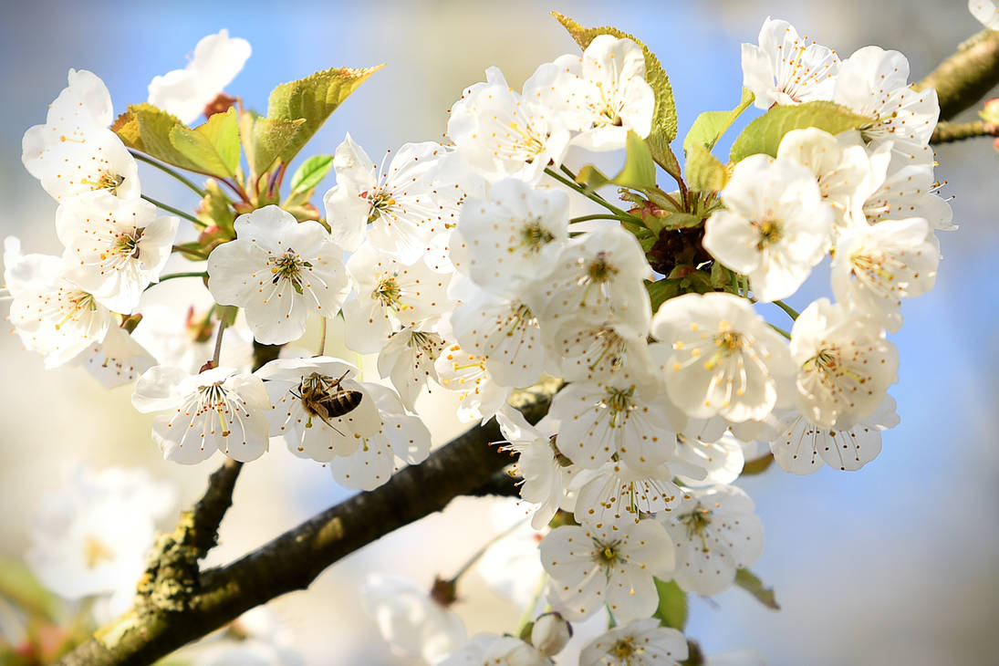 Blossoms 'n' Bee by Parazelsus