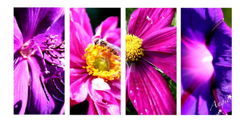 purple - colours pt II