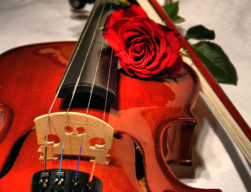Только посмотрела как запели скрипки