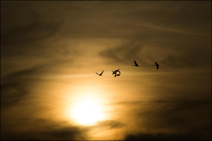 Birds of the Light by db-photoblogDOTcom