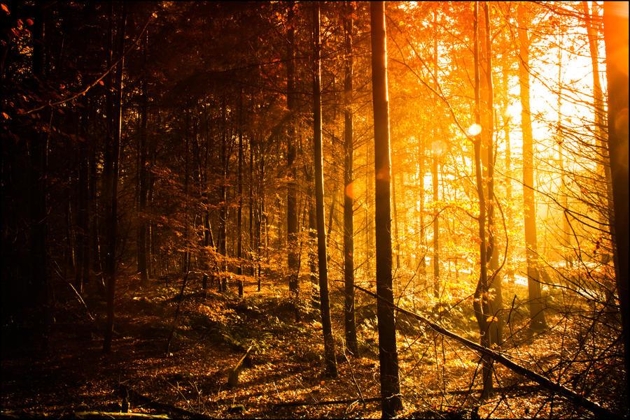 Magical Forrest II by db-photoblogDOTcom