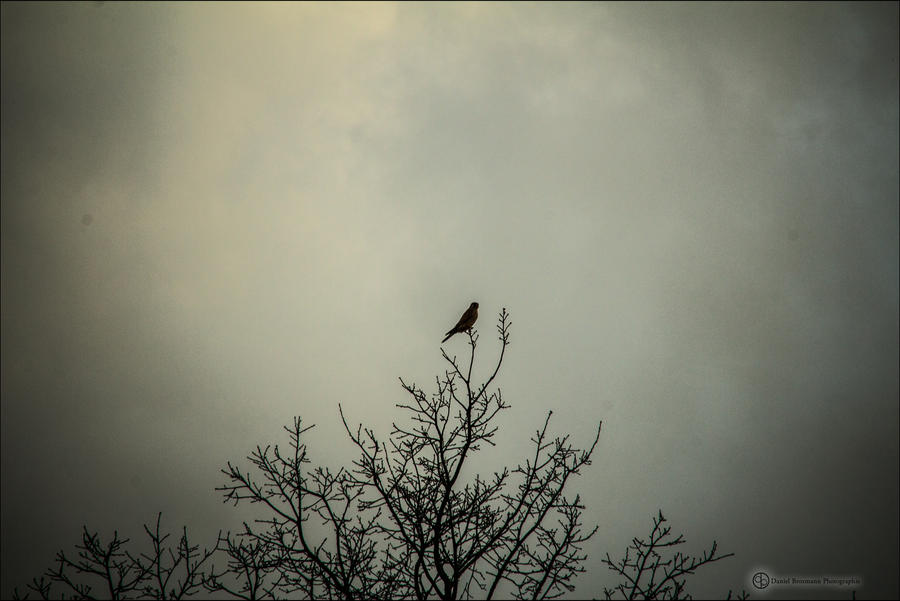 lonely pigeon by db-photoblogDOTcom