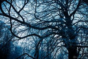 Never Ending Winter II by db-photoblogDOTcom