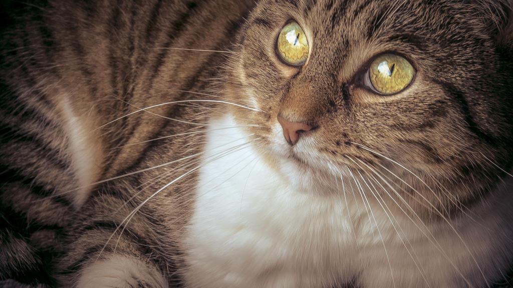 soft kitty, warm kitty, little ball of fur. by db-photoblogDOTcom