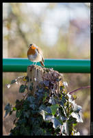 Round Robin by ironiclensflare