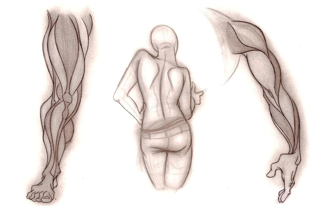 Dynamic Anatomy Sketches by DLeeArt on DeviantArt