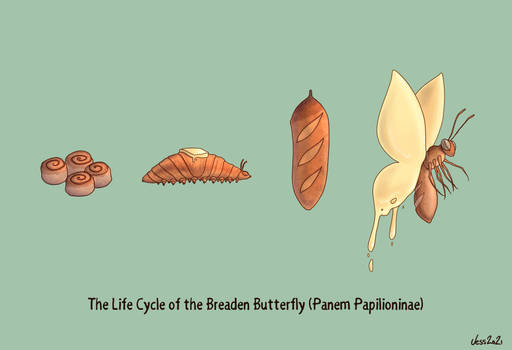 Breaden Butterfly Life Cycle