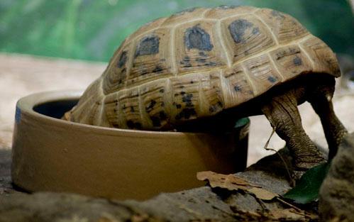 Turtle by clae85