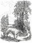 Huan finds Luthien by amorphouscarpus