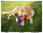 A Pup and His Toy