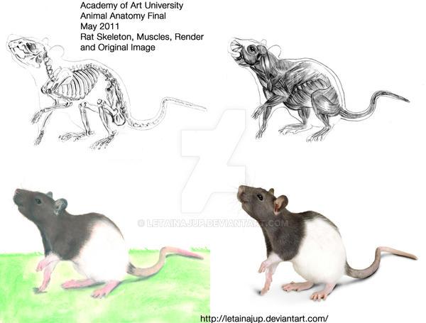 Aau Final Rat Render Drawing By Letainajup On Deviantart
