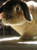 rabbit by ntaverner