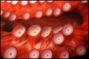 octopus by devilicious