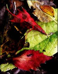 nature's pallette by devilicious