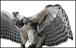 predator with wings