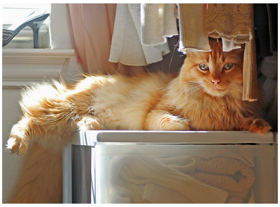 closet cat by devilicious