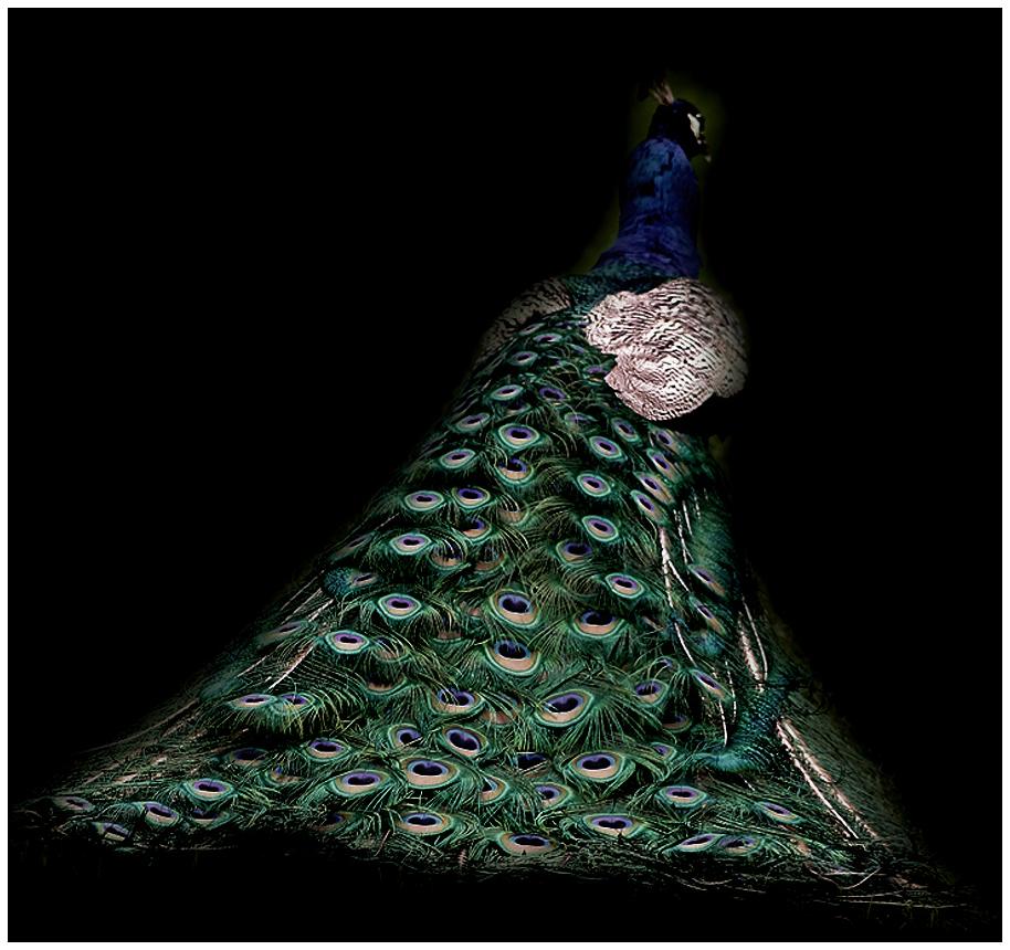 peacock princess by devilicious