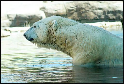 Polar Wuzza