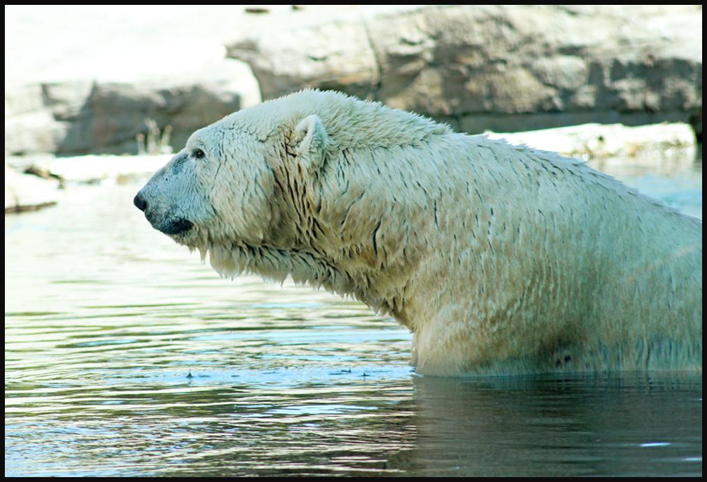 Polar Wuzza by devilicious
