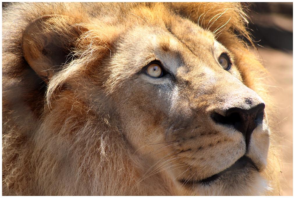 Roar by devilicious