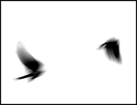 black birding