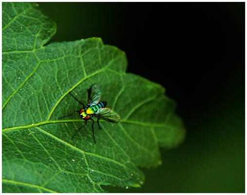 Rainbow Super Fly