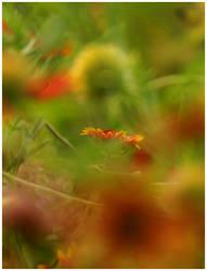Across a Crowded Meadow