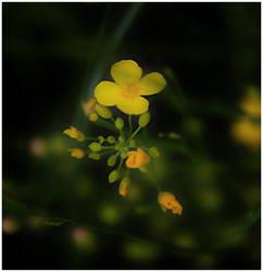 Tiny Yellow Dancer