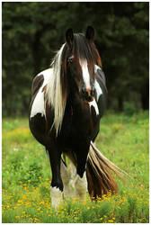 Pretty Princess Horse