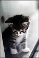 kitten by devilicious