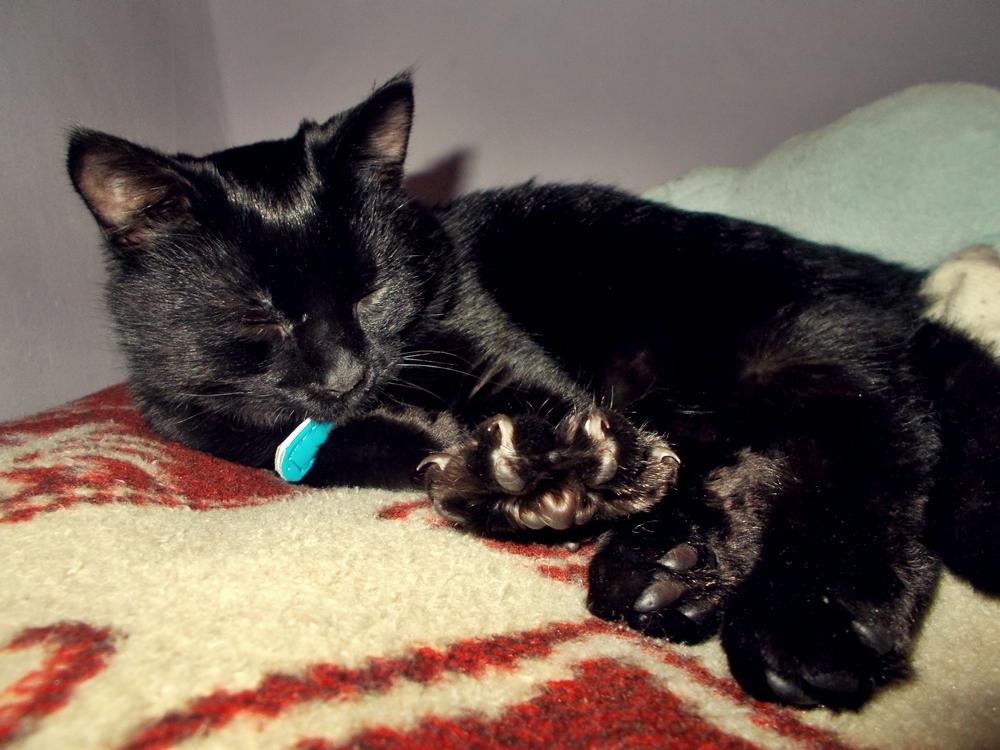 Lucky cat by MustSleep27