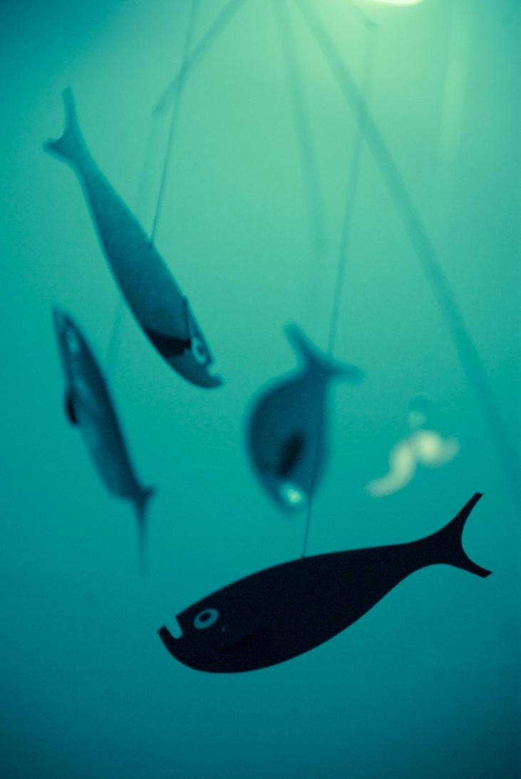 flying fish by T-bau