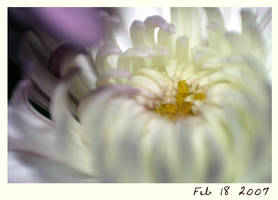 Another flower by tpyj