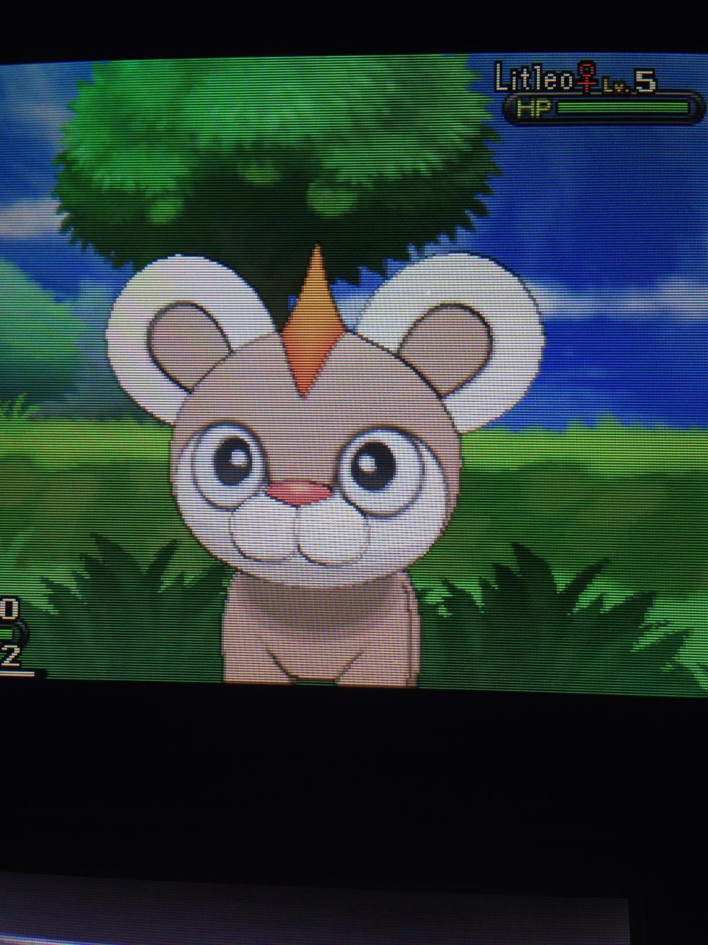 Shiny Litleo :: Pokemon Y by srspibble