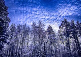 winter by juliana9613