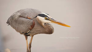 Heron in the Hunt by RHCheng