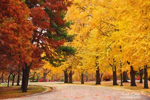 .:Autumn Wonderland:. by RHCheng