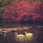 .:Autumn Romance:.