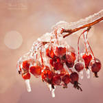 .:Icy Crab Apples:.